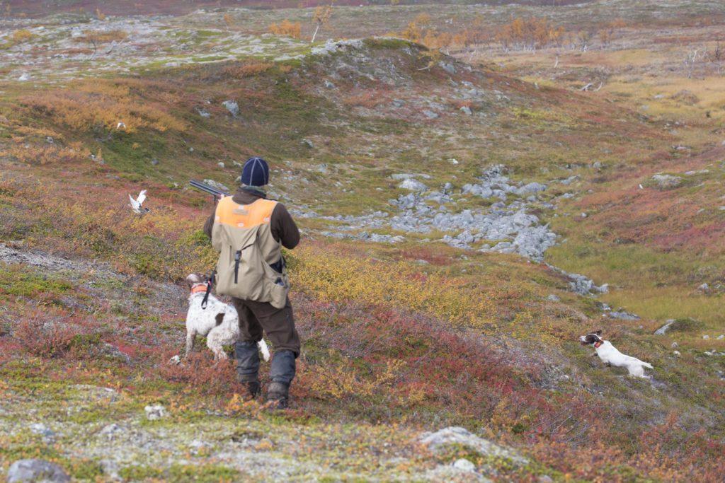 Jägaren i ripjakten på fjället med två stående fågelhundar.
