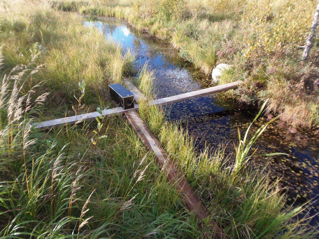 Minkfällan placerad vid vattnet.