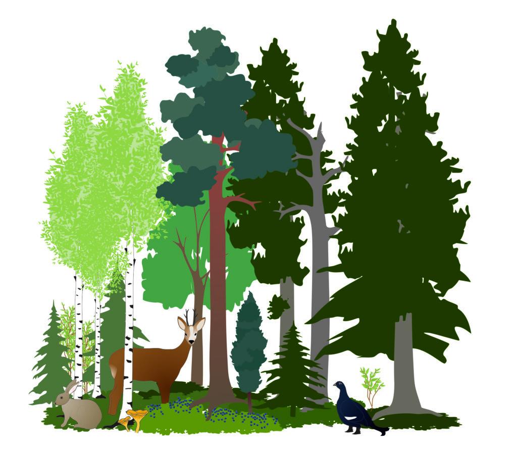Piirroskuva metsästä, jossa on metsäkauris, teeri, metsäjänis, sieniä ja marjoja
