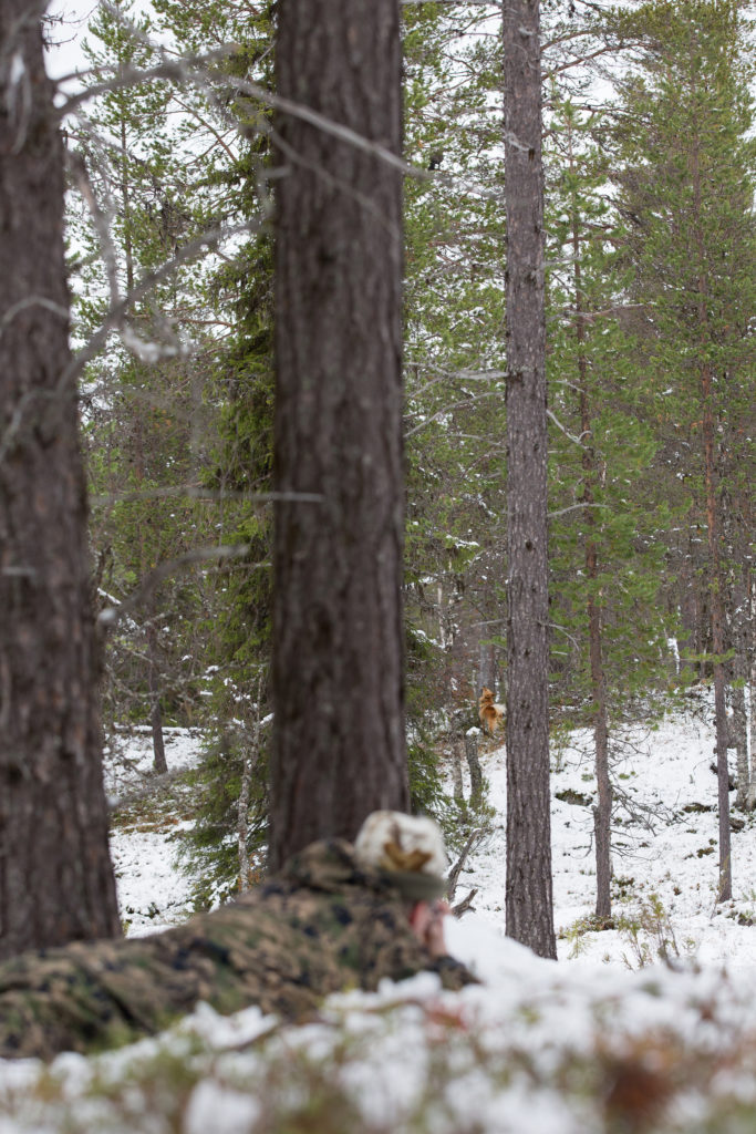Metsästäjä makaa maassa ja pystykorva haukkuu puunjuurella