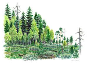 Suon ja metsän vaihettumisvyöhyke