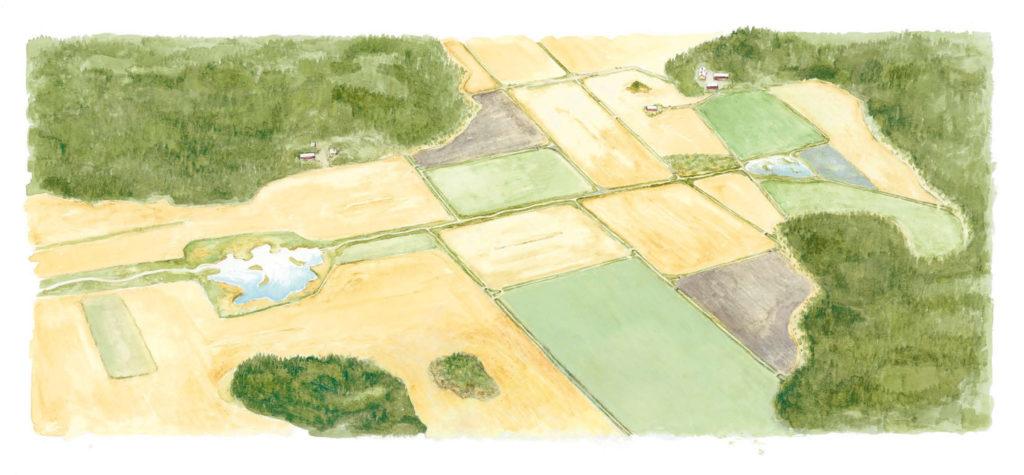 piirroskuva peltoympäristöstä