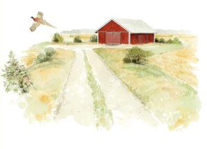 piirros, jossa pelto, punainen lato ja lentävä fasaani