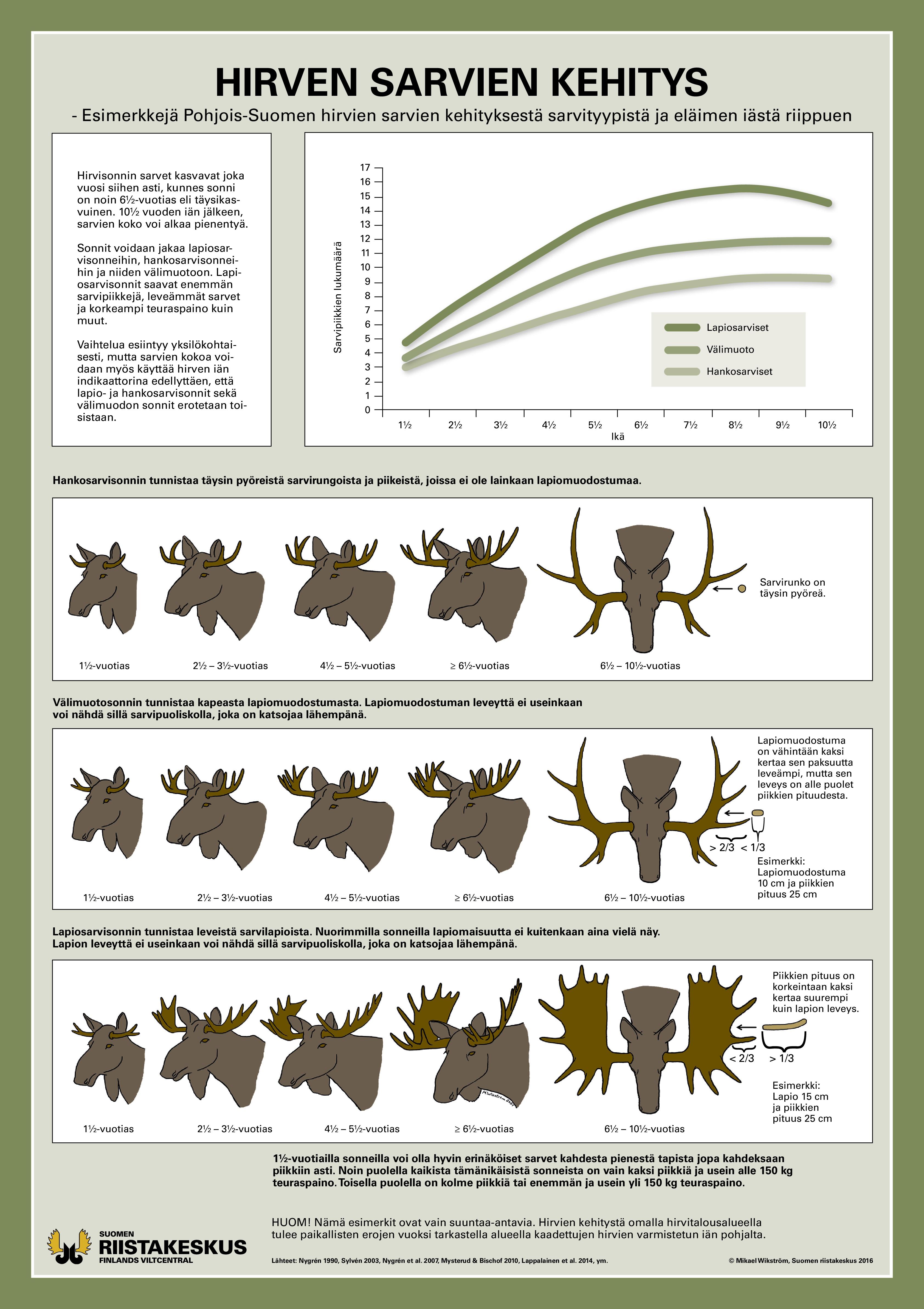 Julisten hirven sarvien kehityksestä Pohjois-Suomessa