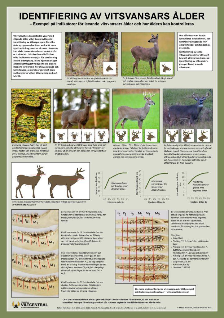 Identifiering av vitsvansars ålder, affisch.