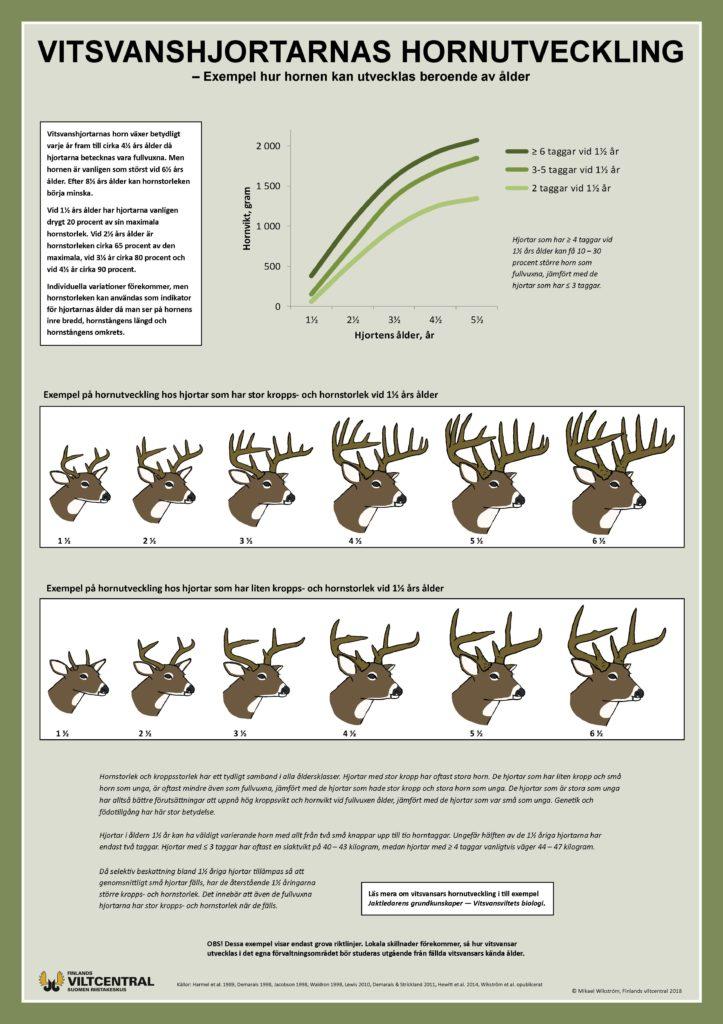Vitsvanshjortarnas hornutveckling affisch.
