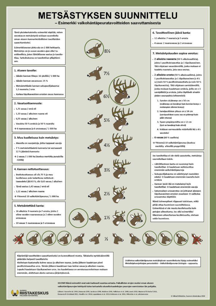 Juliste valkohäntäpeuran metsästyksen suunnittelusta