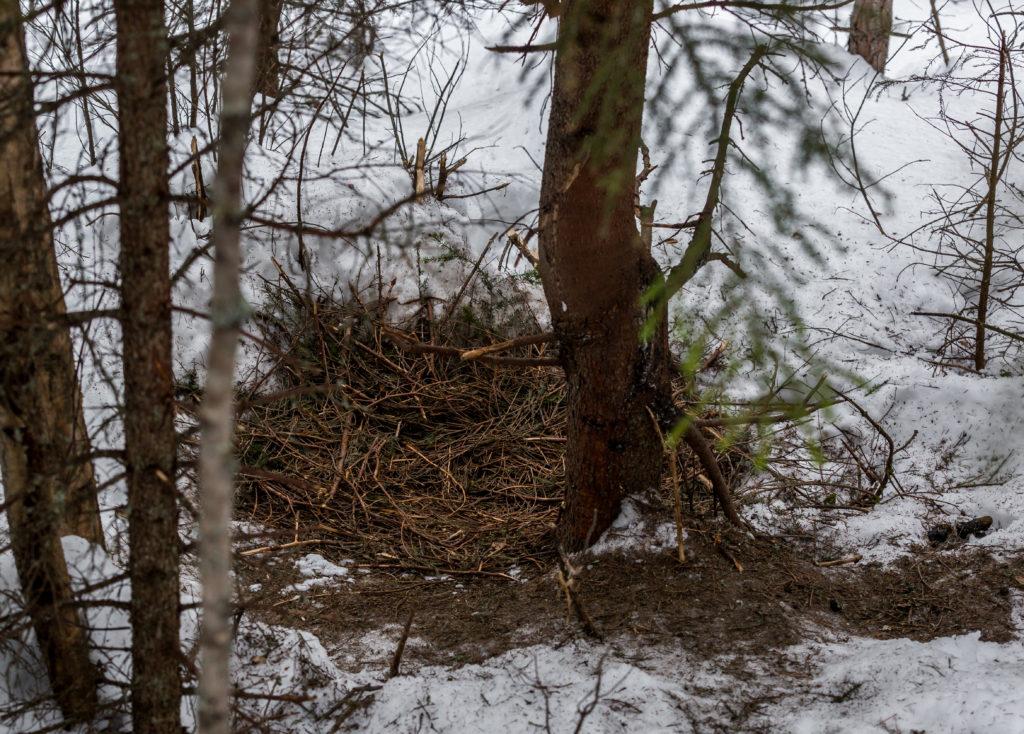 Kuusenoksilla pohjustettu lepopaikan puiden juurella.