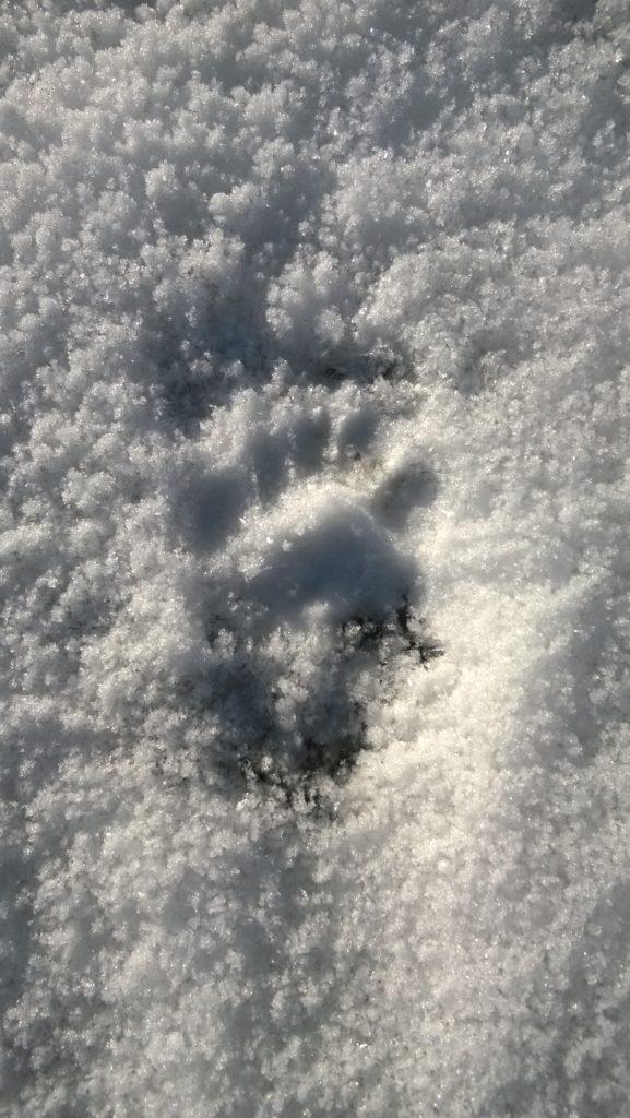 Jäljet lumella.
