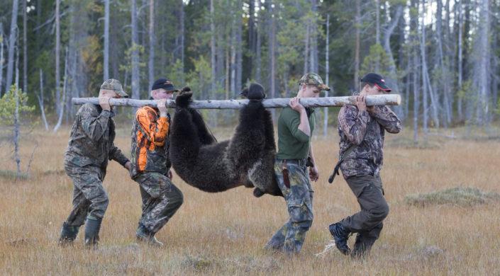 Kaadettua karhua kannetaan