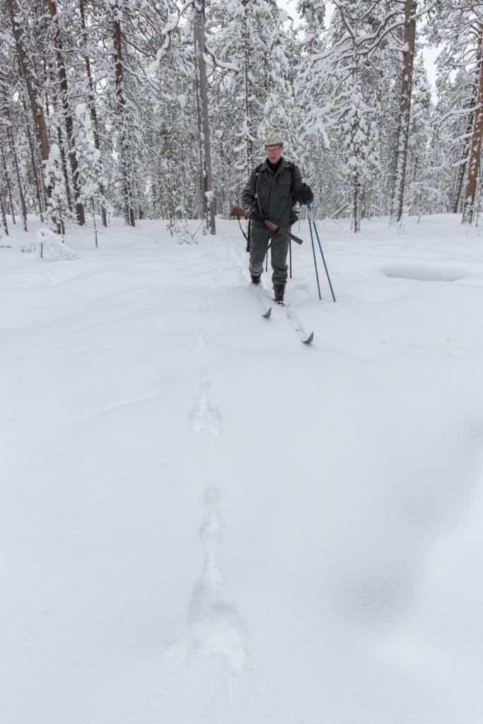 Jägaren åker skidor i skogen.