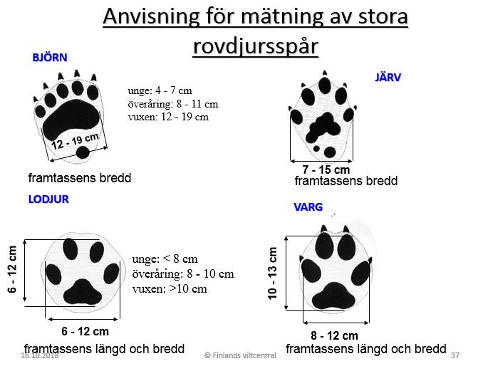 Anvisning för mätning av stora rovdjursspår. Längden eller bredden mäts från de yttersta tåtrampdynorna.