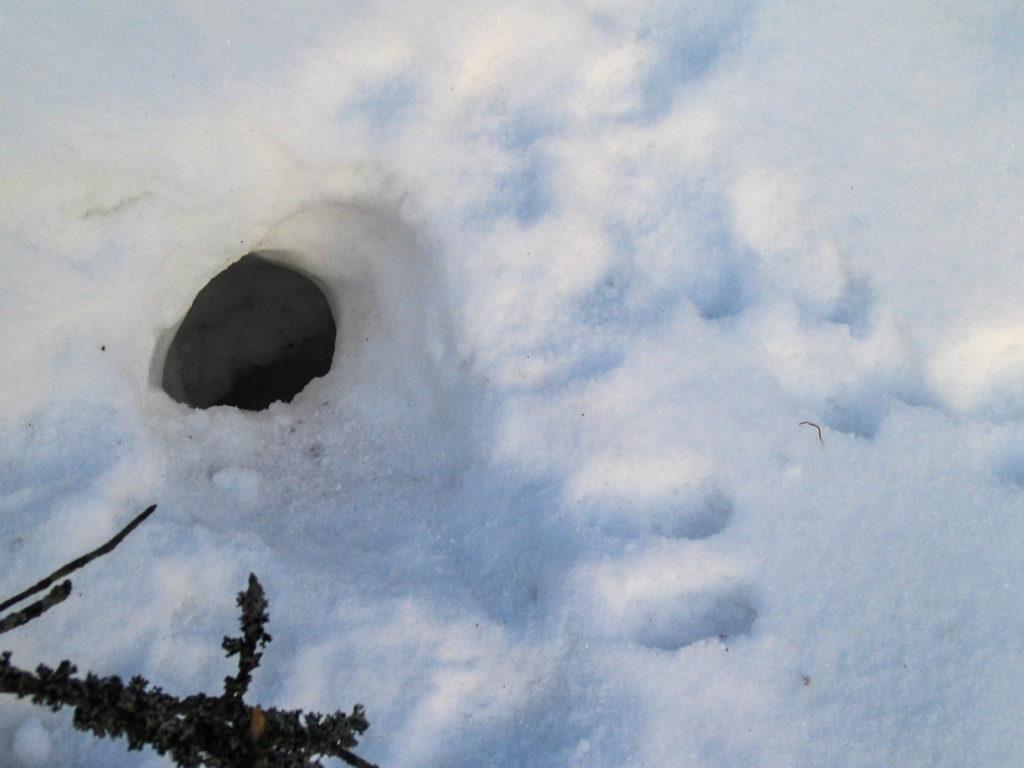 Päivämakuupaikka on lumeen kaivettu luola.