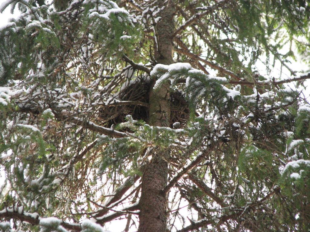 Oravanpesä.