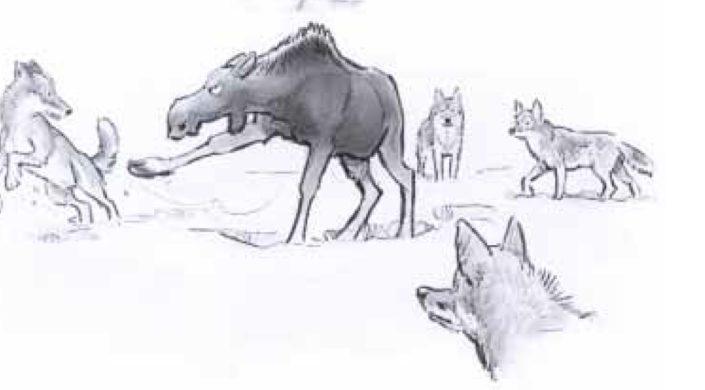 Riistaeläinekologia, piirroskuvassa hirvi puolustautuu saalistavia susia vastaan potkulla.