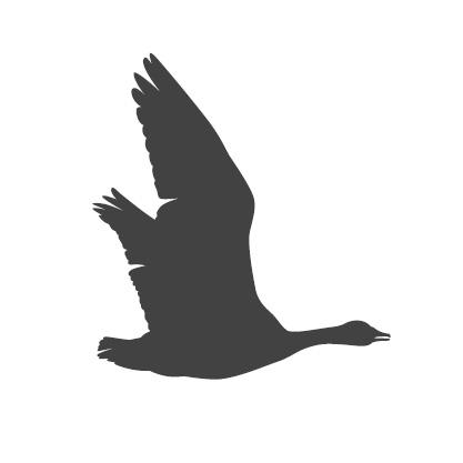Piirretty siluettikuva lentävästä hanhesta