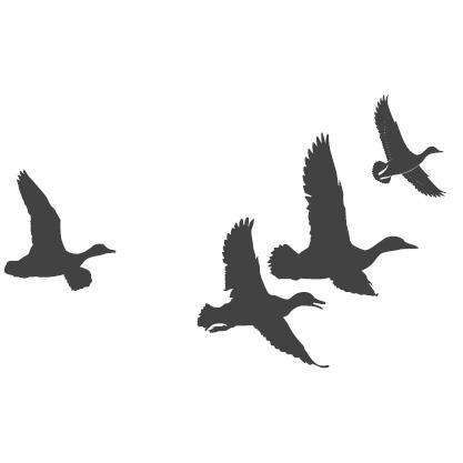 Piirretty siluettikuva lentävistä sorsista