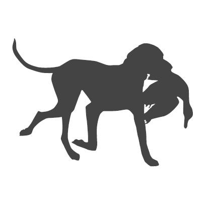 Piirroskuva sorsaa kantavasta noutavasta koirasta