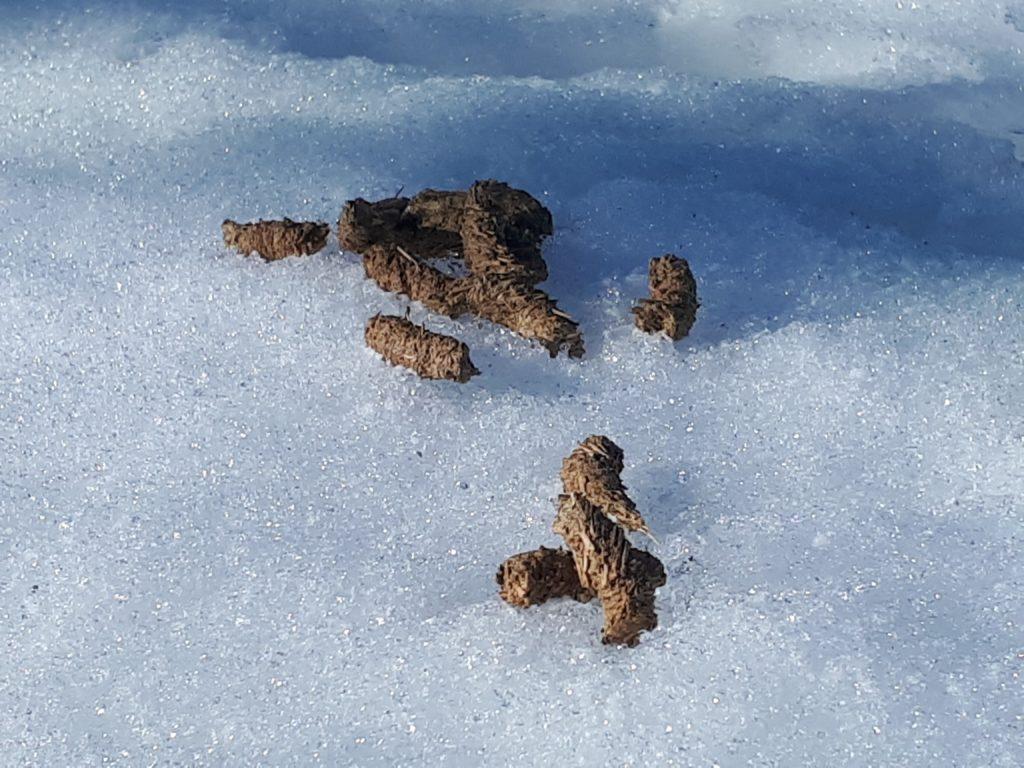 Ruskeita jätöksiä lumihangella.