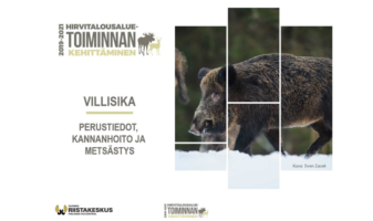 Aloitusdia Villisika - perustiedot, kannanhoito ja metsästys -koulutuspaketista.