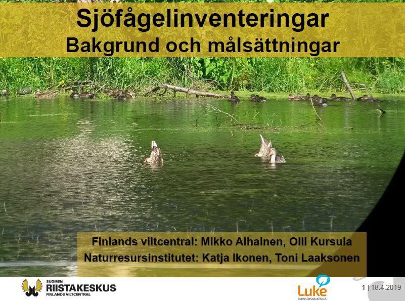 Presentation av sjöfågelinventeringar.