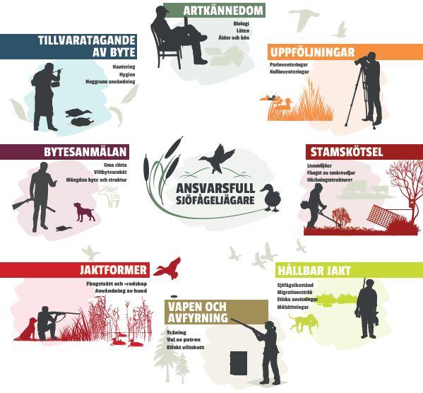 Fågeljägarens årscykel: artkännedom, uppföljningar, stamskötsel, hållbar jakt, vapen och avfyrning, jatkformer, bytesanmälan, tillvaratagande av byte.